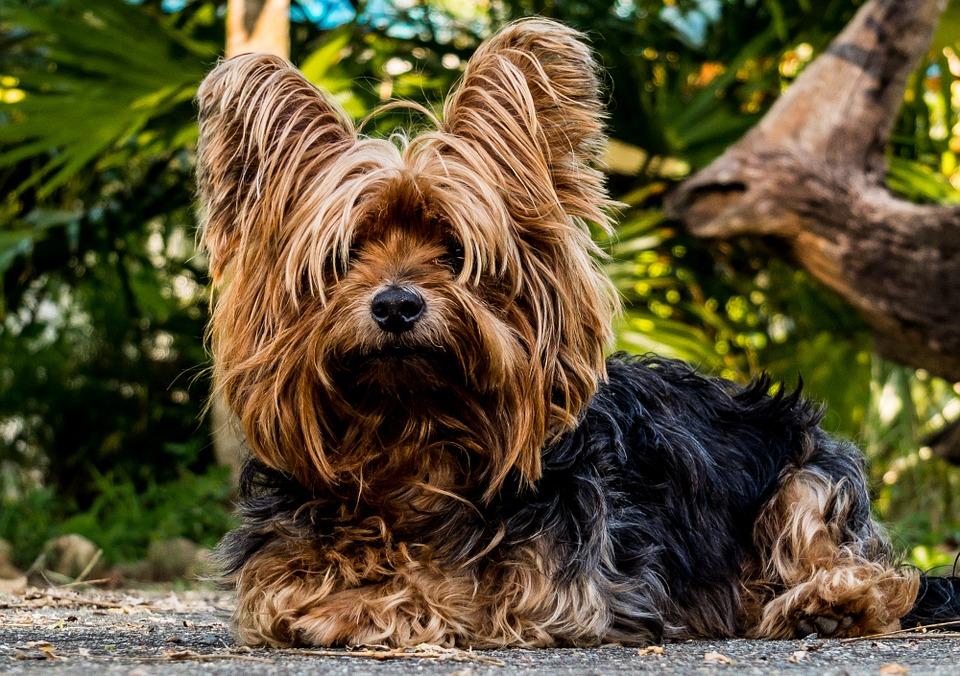 La mascota preferida por los nativos de Acuario
